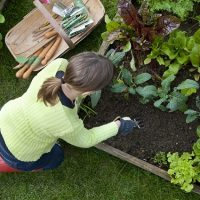 Aerial shot of woman weeding a raised bed in a vegetable garden.